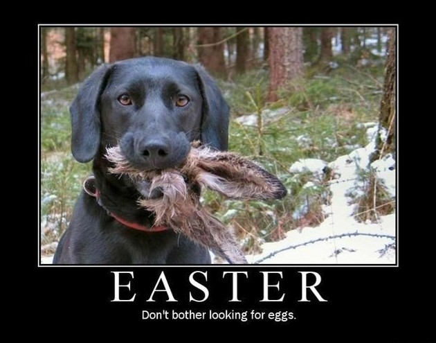 Easter-Dont-Bother-Looking-for-Eggs