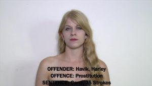 Harley Havik